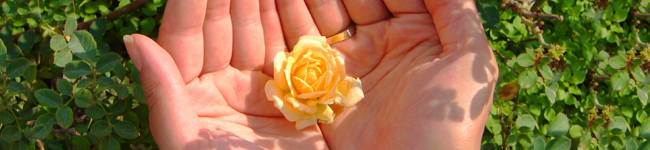 Flower in Hands Image